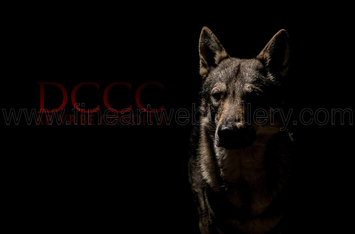 Max Angeloni - DCCC Ab Urbe Condita - 01