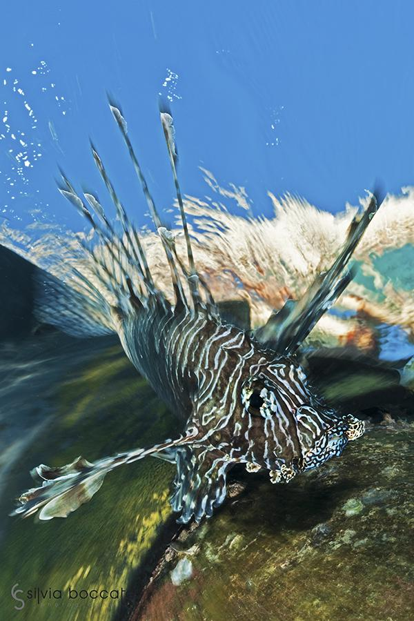 Silvia Boccato - Unterwater Wildlife SBO3