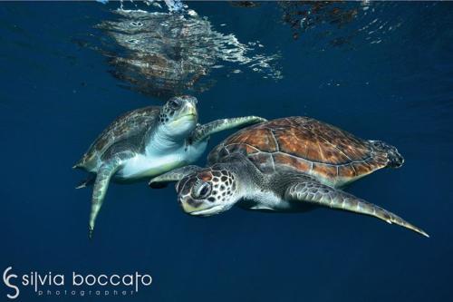 Silvia Boccato - Unterwater Wildlife SBO6