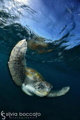 Silvia Boccato - Unterwater Wildlife SBO8